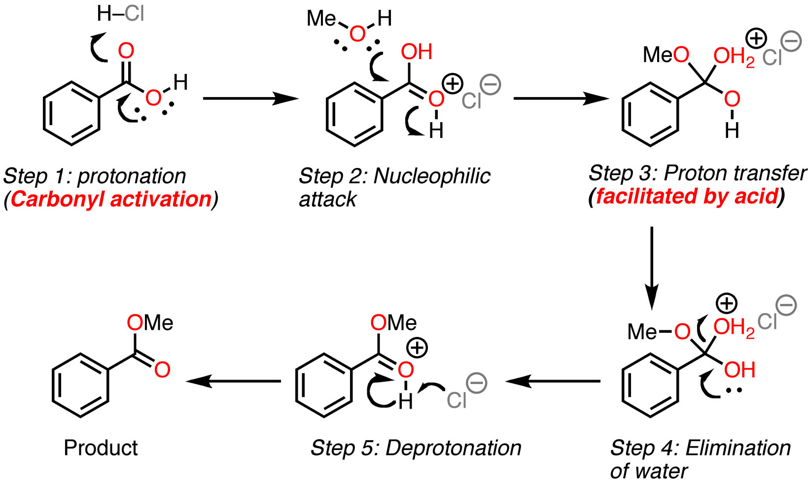 fischer esterification So my understanding is that protonation of the carbonyl carbon of a carboxylic acid makes the c more susceptible to nucleophilic attack, since the.